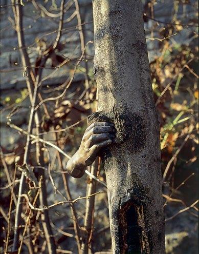 Alpes maritimes. Il poursuivra sa croissance sauf en ce point, 1968. Acier, arbre Vue prise à un moment de la croissance de l'arbre Ph. Giuseppe Penone et Dina Carrara, 1978 © ADAGP, Paris 2007
