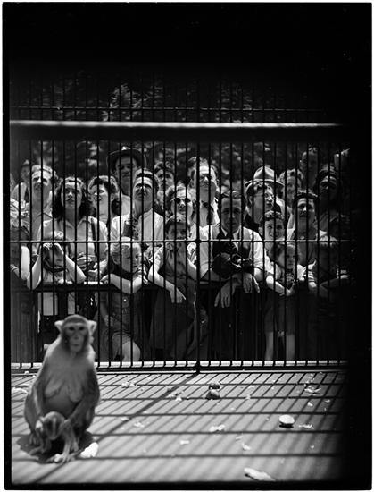 How People Look to Monkeys [Crowd looking at a monkey in a cage.]