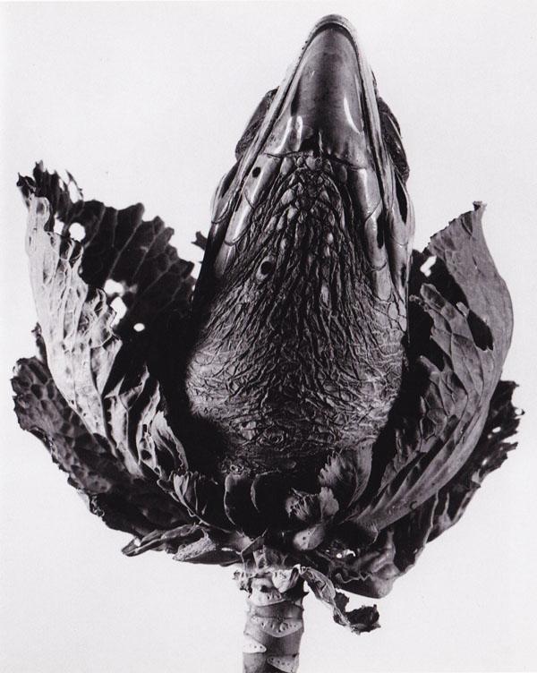 Lavandula Angustifolia, série «Herbarium», Barcelone, 1984